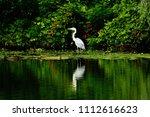 ardea cinerea on the river... | Shutterstock . vector #1112616623