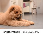 chow chow puppy in the house.... | Shutterstock . vector #1112623547