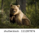 A brown bear in the forest - stock photo