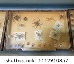 beni abbes museum  bechar ...   Shutterstock . vector #1112910857