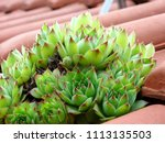 watchtower plant on the roof of ... | Shutterstock . vector #1113135503