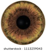 brown eye iris   vector art  ... | Shutterstock .eps vector #1113259043