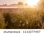 early morning in the meadow ... | Shutterstock . vector #1113277457