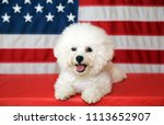 bichon frise dog with american... | Shutterstock . vector #1113652907