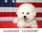 bichon frise dog with american... | Shutterstock . vector #1113653087