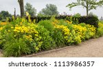colorful yellow flowerbed with... | Shutterstock . vector #1113986357