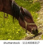 horse eating on a street of a...   Shutterstock . vector #1114008317