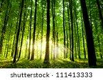 beautiful green forest | Shutterstock . vector #111413333
