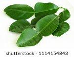 fresh kaffir lime leaves in...   Shutterstock . vector #1114154843