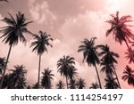 coconut palm trees   tropical... | Shutterstock . vector #1114254197