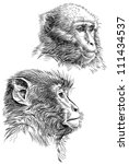 monkeys | Shutterstock . vector #111434537