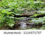 bolu  yedig ller national park  ... | Shutterstock . vector #1114371737