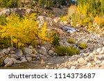 aspen grove at autumn in rocky... | Shutterstock . vector #1114373687
