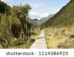 the foot path in the rwenzori... | Shutterstock . vector #1114386923