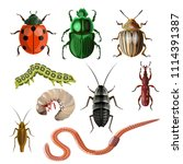 set of different insects and... | Shutterstock .eps vector #1114391387