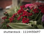 red and pink flowers in... | Shutterstock . vector #1114450697