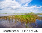 swamp and grass of everglades... | Shutterstock . vector #1114471937