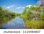 swamp and grass of everglades... | Shutterstock . vector #1114484807