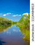 swamp and grass of everglades... | Shutterstock . vector #1114484813