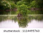 summer landscape. swamp  marsh  ...   Shutterstock . vector #1114495763
