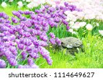 flowerbed with purple and pink... | Shutterstock . vector #1114649627