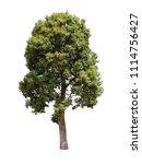 collection of isolated trees on ... | Shutterstock . vector #1114756427