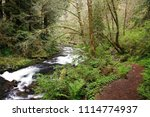 Small photo of Red alder, Sweet Creek trail, Siuslaw National Forest, Oregon, USA