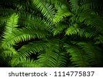 scenic landscapes of bowen...   Shutterstock . vector #1114775837