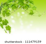 Collage. branches of grapes - stock photo