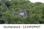 the heron sits in a nest with... | Shutterstock . vector #1114939907