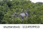 the heron sits in a nest with... | Shutterstock . vector #1114939913