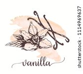 vanilla sketch on watercolor... | Shutterstock .eps vector #1114969637