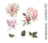 roses and leaves  watercolor ... | Shutterstock . vector #1115011727