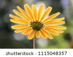 under side view of single... | Shutterstock . vector #1115048357