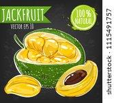 fresh jackfruit bright sketch...   Shutterstock .eps vector #1115491757