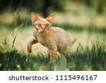 curious funny young red ginger... | Shutterstock . vector #1115496167