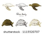 vector illustration. pen style... | Shutterstock .eps vector #1115520707