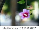 beautiful single flower  | Shutterstock . vector #1115529887