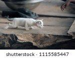 adorable animals   photo of a... | Shutterstock . vector #1115585447