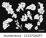 set of jasmine's silhouettes.... | Shutterstock .eps vector #1115726057