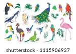 collection of beautiful... | Shutterstock .eps vector #1115906927