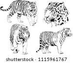 vector drawings sketches... | Shutterstock .eps vector #1115961767