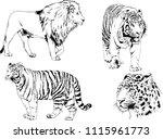 vector drawings sketches... | Shutterstock .eps vector #1115961773