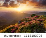 mountains during flowers... | Shutterstock . vector #1116103703
