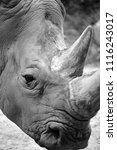 white rhinoceros or square...   Shutterstock . vector #1116243017