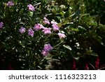 colorful  flowers with  bokeh...   Shutterstock . vector #1116323213
