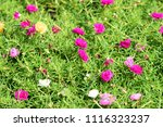 colorful  flowers with  bokeh...   Shutterstock . vector #1116323237