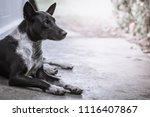 Homeless Dog Stray Dog Vagrant...