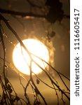 midsummer morning sunrise in... | Shutterstock . vector #1116605417