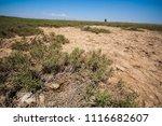 abandoned bird nest on a very... | Shutterstock . vector #1116682607